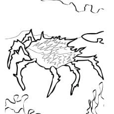 ᐅ 15 erstaunliche zeichnungen von meerestieren zum