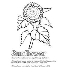 Eine Sonnenblume Malvorlagen