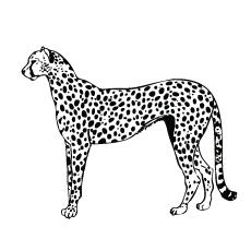 Gepard-gepard