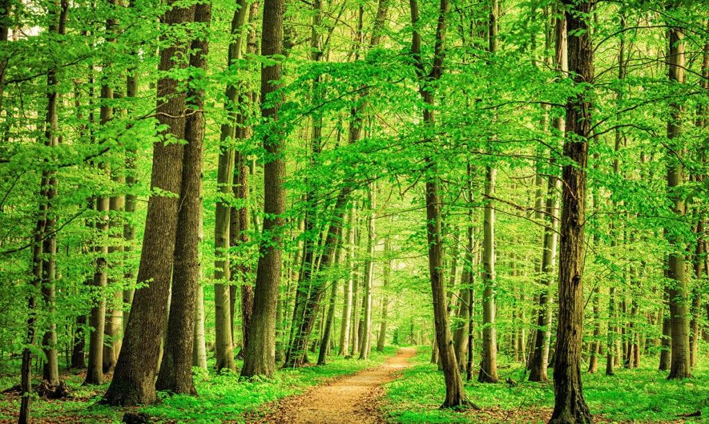 Encontrar un camino hacia la paz