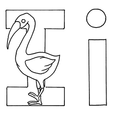 The-i-for-ibis