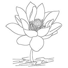 Eine Lotusblume